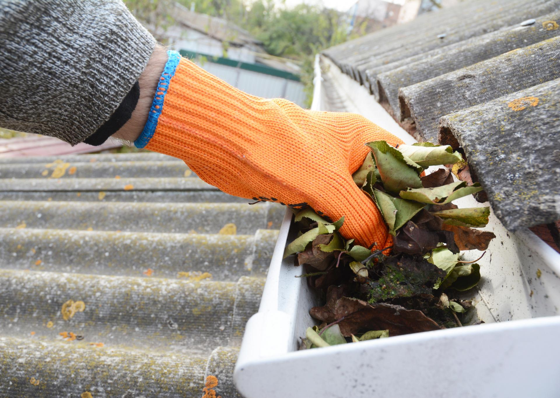 The Importance of Fall Gutter Cleaning - San Diego Pro ...